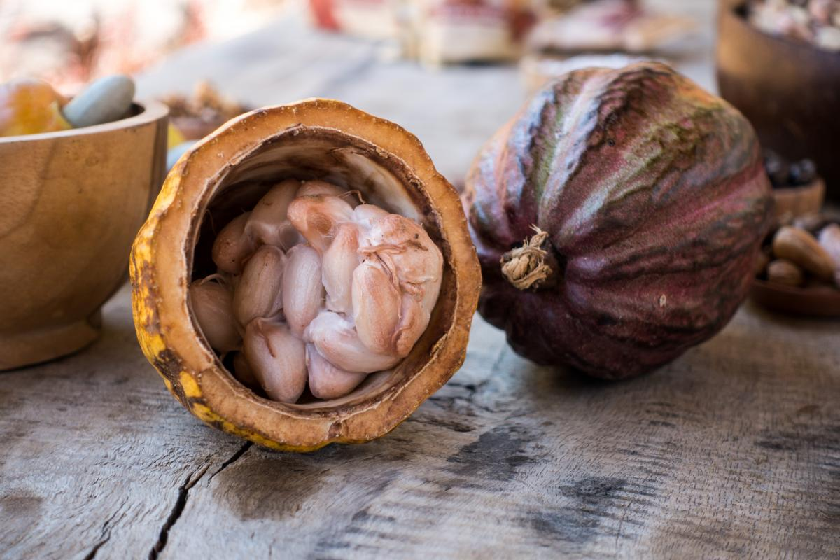 cacao pod cut in half to show beans inside