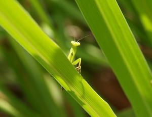 Photo Credit: Biodiversity Act