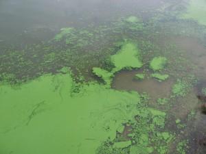 Photo Credit: Dr. Jennifer L. Graham | U.S. Geological Survey