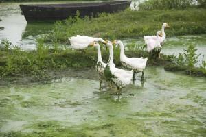 Photo Credit: Greenpeace China