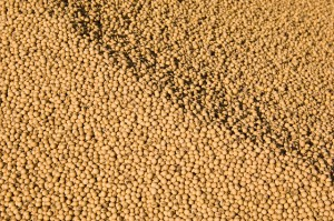 Photo credit: United Soybean Board