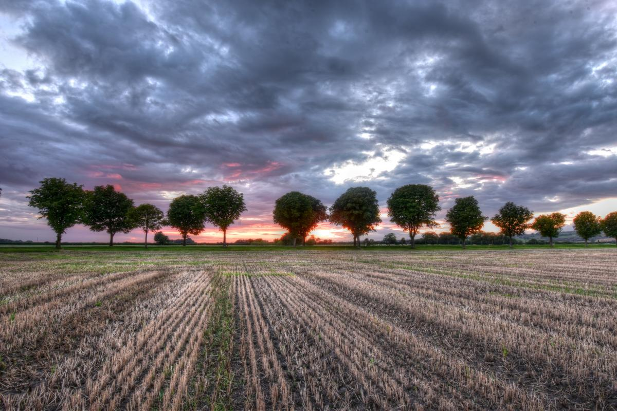 farm field with line of trees, sunset and storm clouds above
